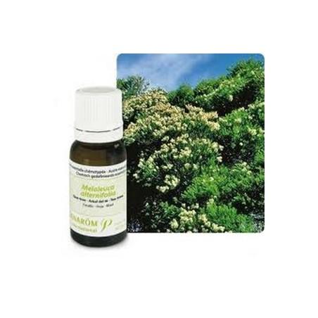 Aceite esencial del árbol del té orgánico 10ml - Aromathérapie Pranarom